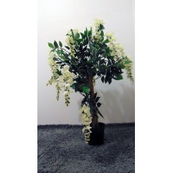 Arbre fleurie glycine blanc