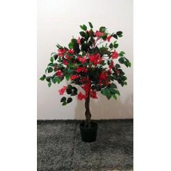 Arbre fleurie Bougainvillea